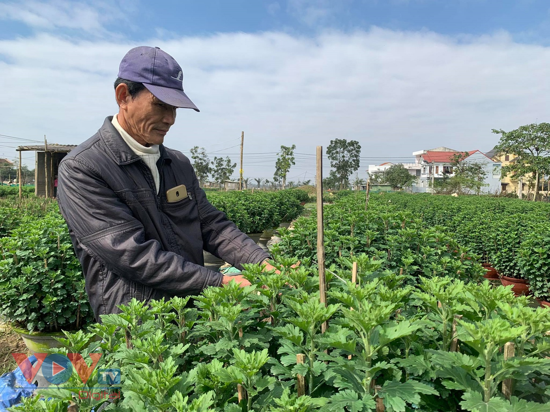 Ông Nguyễn Đắc Lộc, ở làng Dạ Lê Chánh, xã Thủy Vân, thị xã Hương Thủy chăm sóc hoa phục vụ Tết.jpg