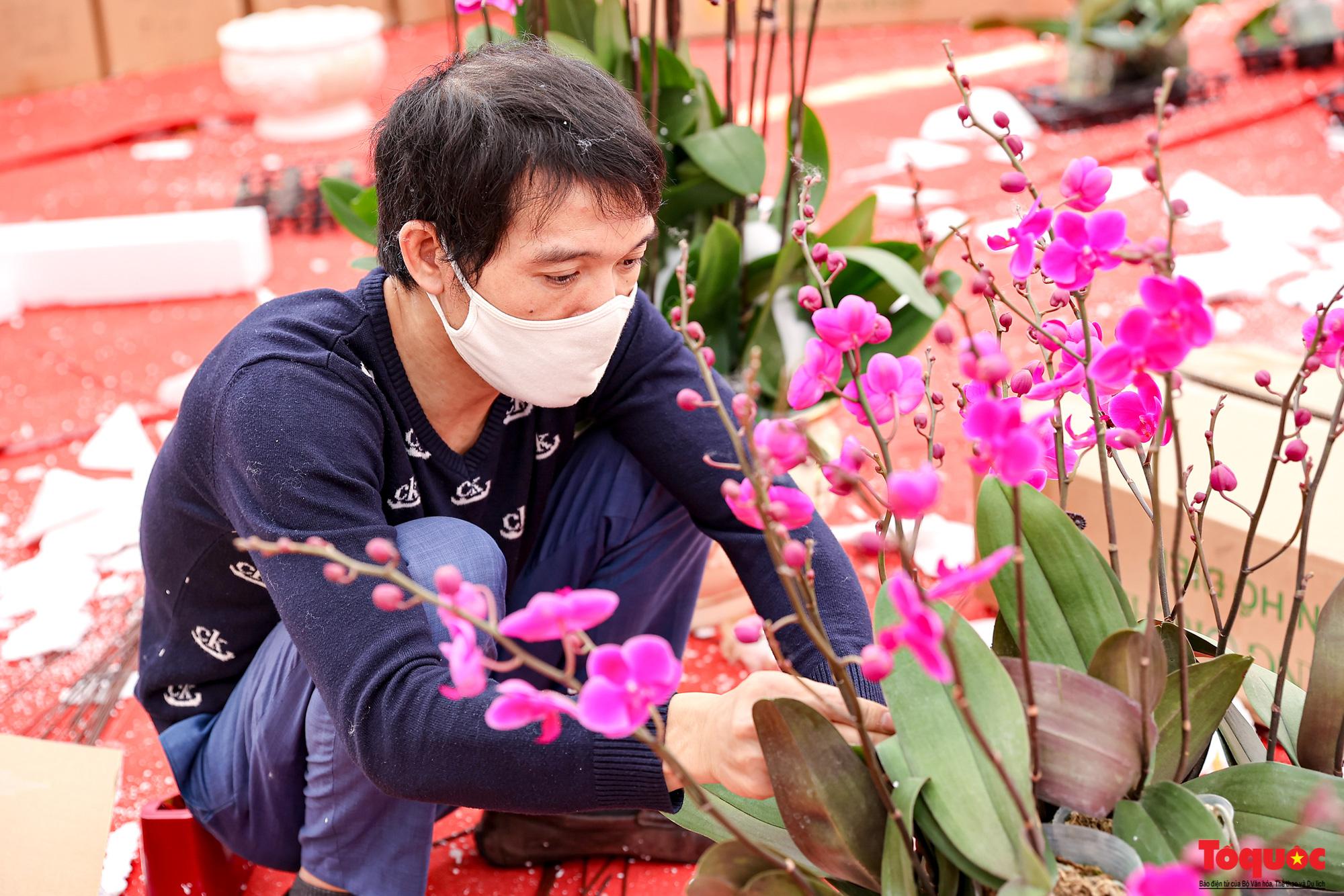 Lan Hồ Điệp giá hàng trăm triệu xuất hiện tại Hà Nội phục vụ Tết Nguyên đán - Ảnh 4.