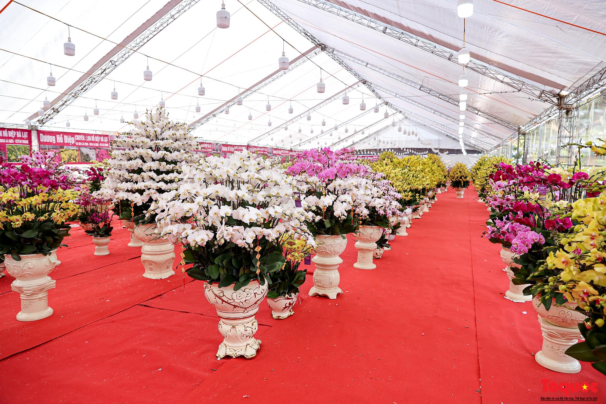 Lan Hồ Điệp giá hàng trăm triệu xuất hiện tại Hà Nội phục vụ Tết Nguyên đán - Ảnh 1.
