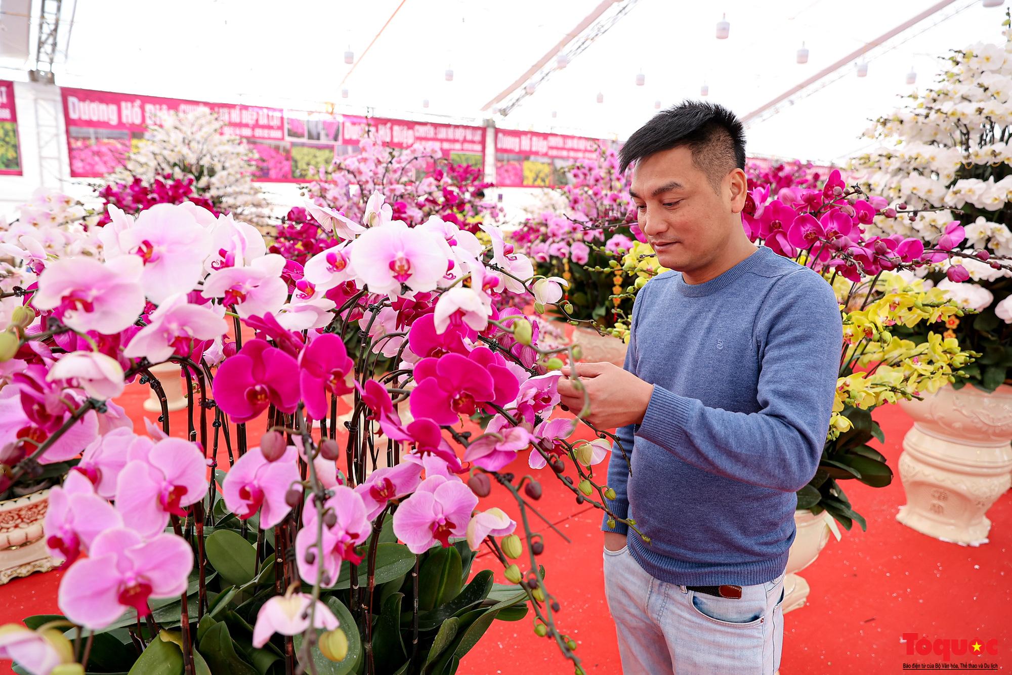 Lan Hồ Điệp giá hàng trăm triệu xuất hiện tại Hà Nội phục vụ Tết Nguyên đán - Ảnh 7.
