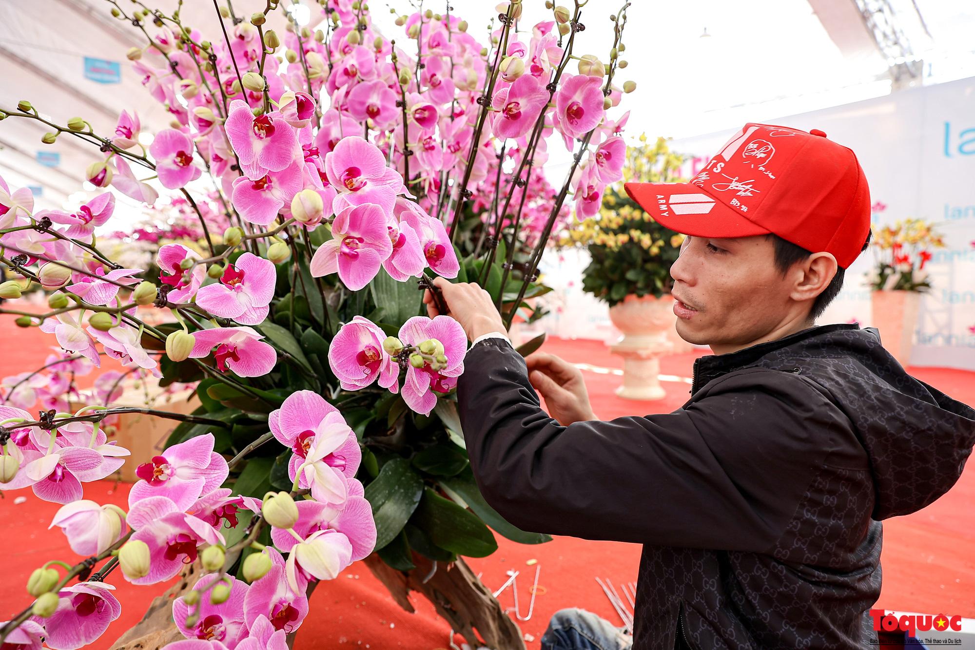 Lan Hồ Điệp giá hàng trăm triệu xuất hiện tại Hà Nội phục vụ Tết Nguyên đán - Ảnh 11.