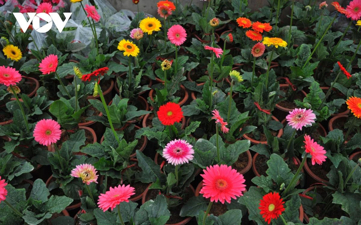 Những loại hoa chơi Tết dành cho... nhà nghèo - Ảnh 6.