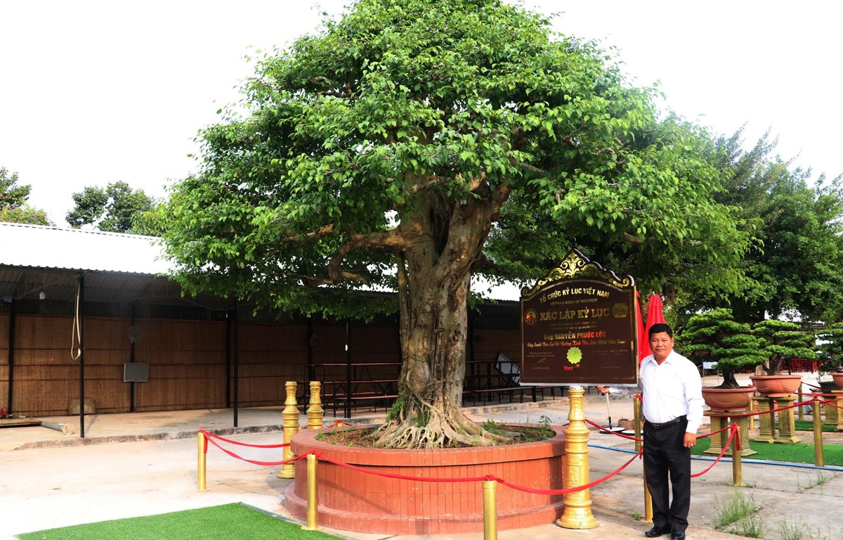 ttxvn-bonsai5.jpg