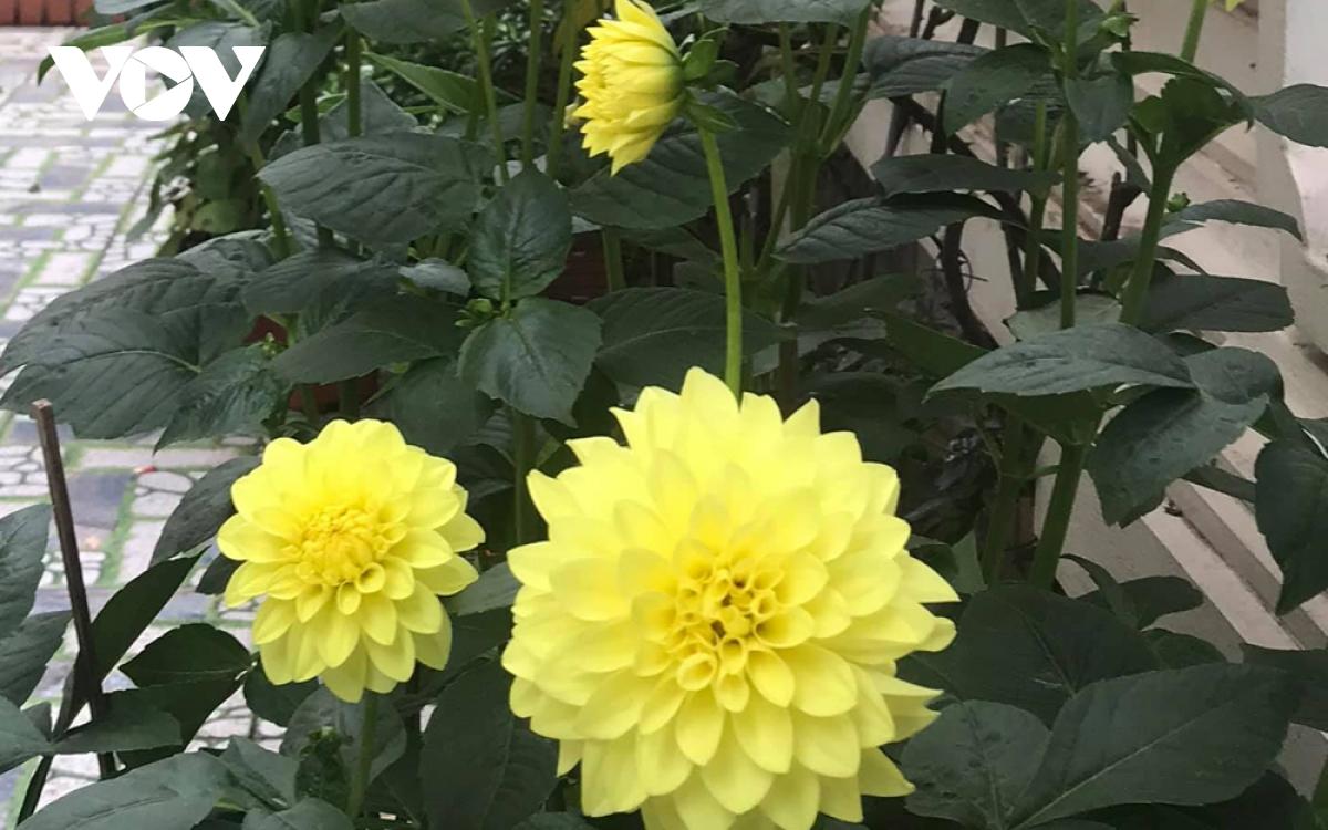 Những loại hoa chơi Tết dành cho... nhà nghèo - Ảnh 7.
