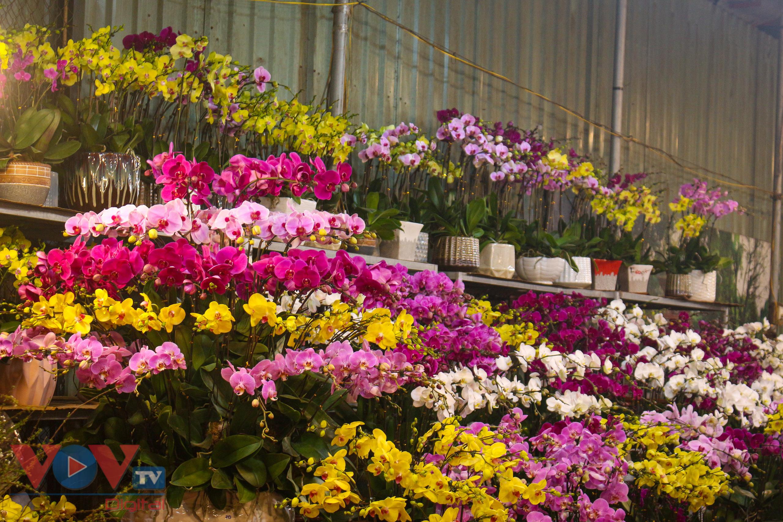 Chợ hoa Quảng An tất bật trong đêm những ngày cận Tết - Ảnh 12.