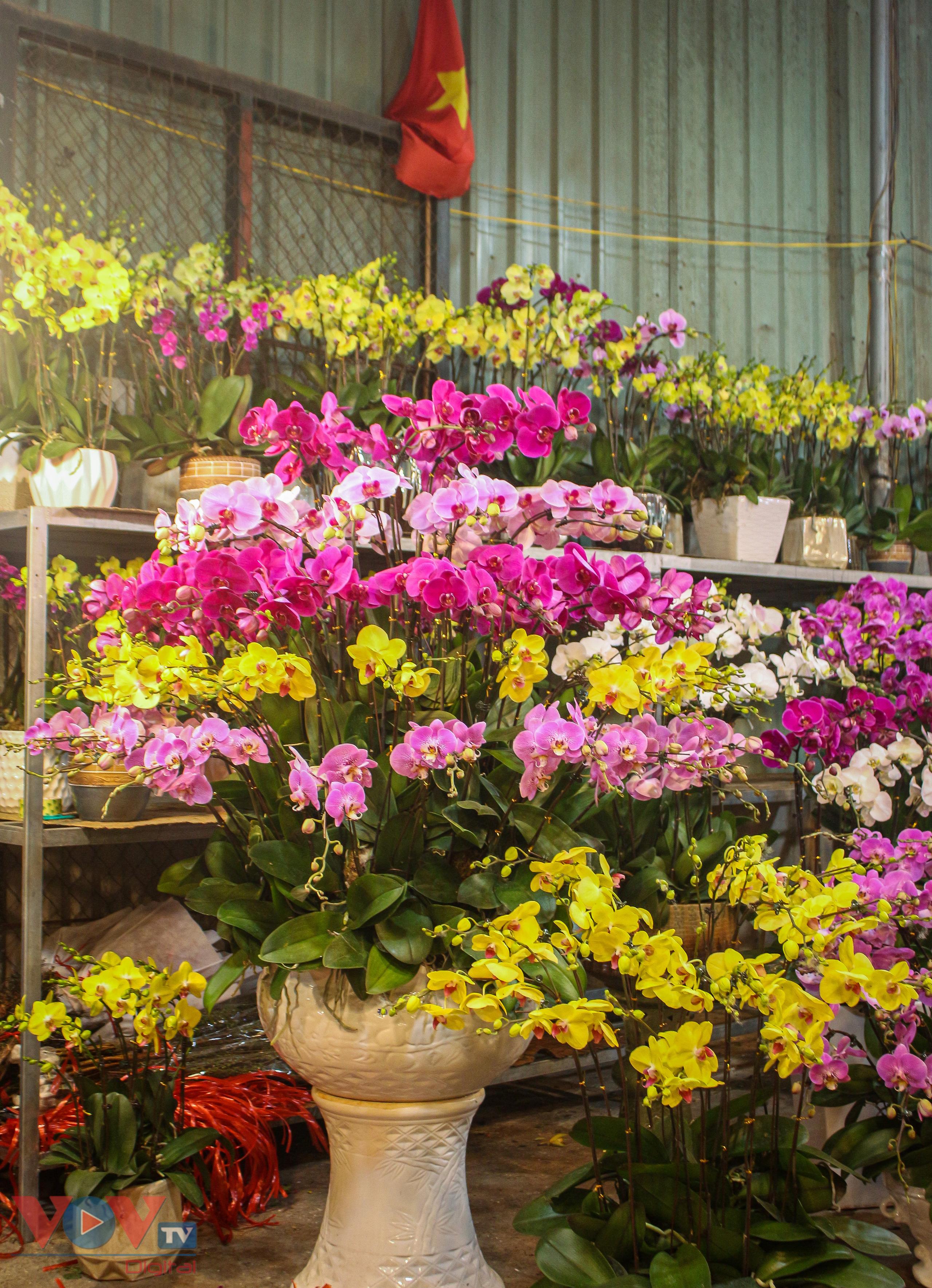 Chợ hoa Quảng An tất bật trong đêm những ngày cận Tết - Ảnh 13.