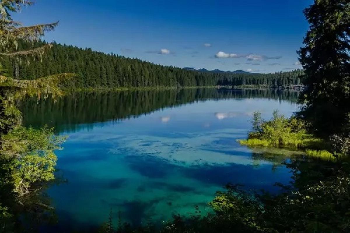 Chiêm ngưỡng những khu rừng ngập nước đẹp sững sờ - Ảnh 1.