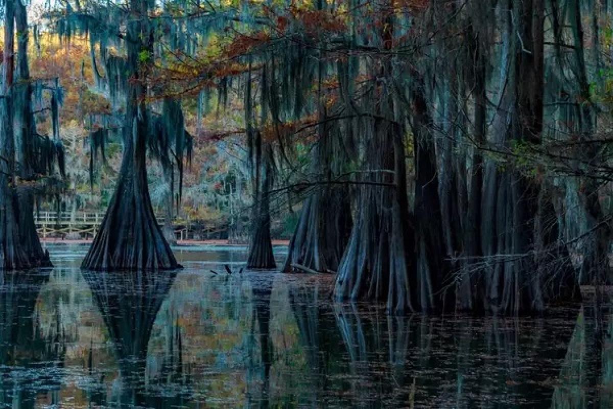 Chiêm ngưỡng những khu rừng ngập nước đẹp sững sờ - Ảnh 2.