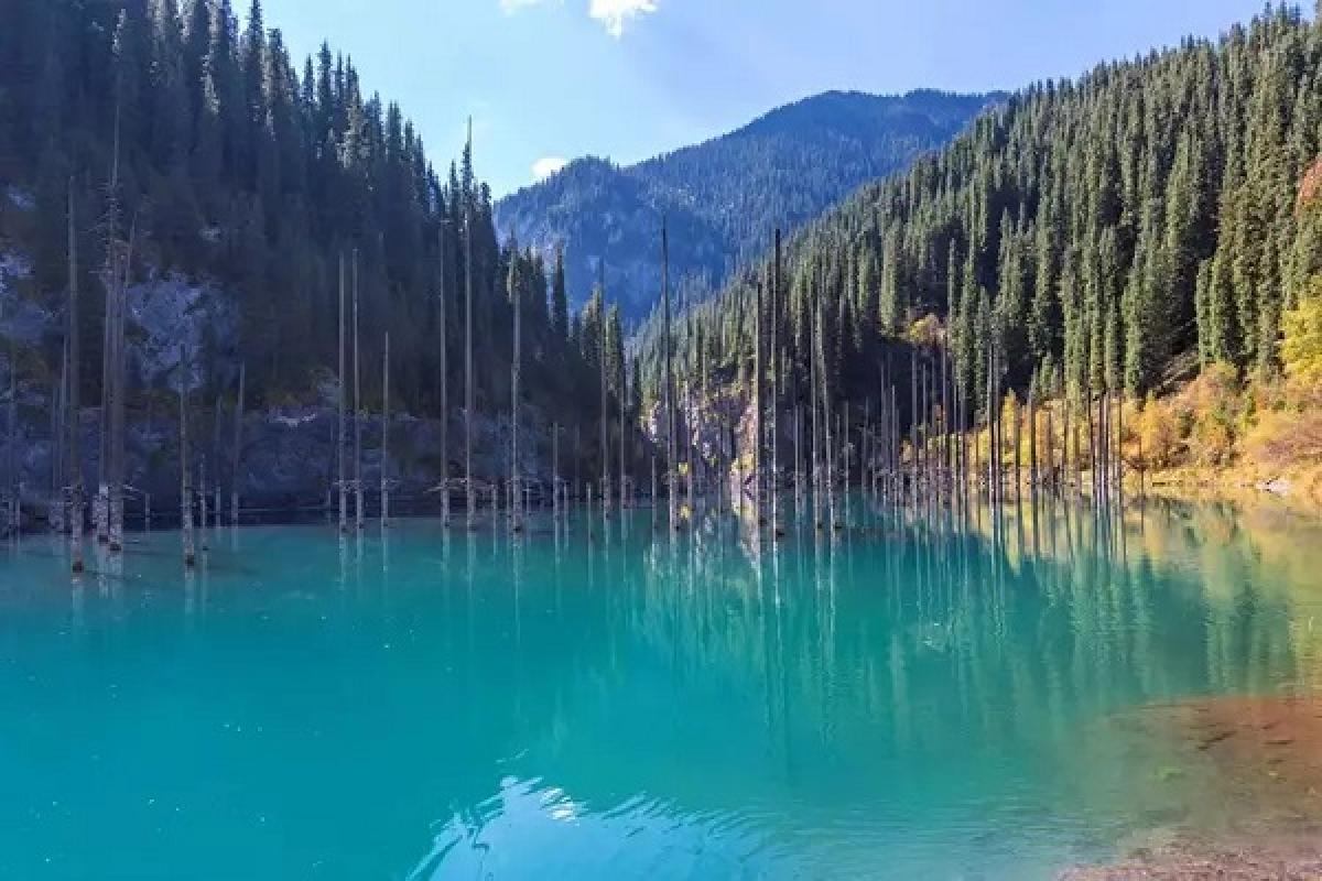 Chiêm ngưỡng những khu rừng ngập nước đẹp sững sờ - Ảnh 4.