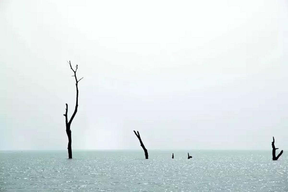 Chiêm ngưỡng những khu rừng ngập nước đẹp sững sờ - Ảnh 5.