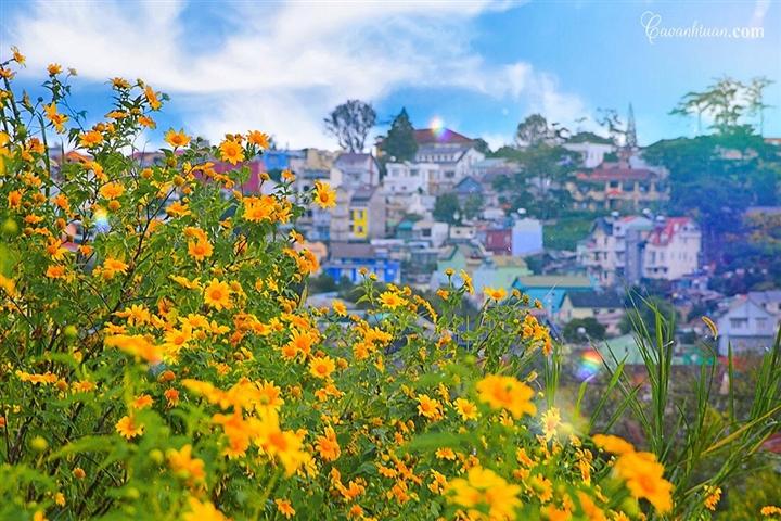 Đà Lạt rục rịch đón mùa hoa Dã quỳ trên 4 cung đường vàng rực đẹp xuất sắc - Ảnh 8.