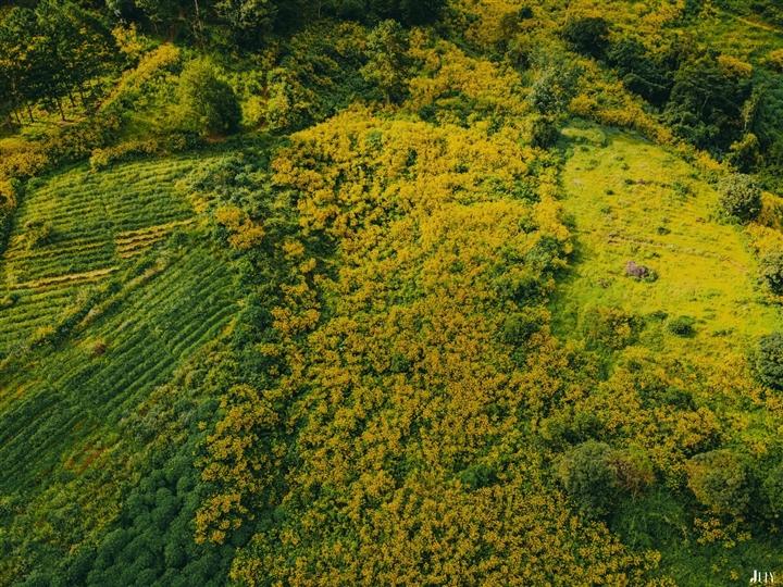 Đà Lạt rục rịch đón mùa hoa Dã quỳ trên 4 cung đường vàng rực đẹp xuất sắc - Ảnh 1.