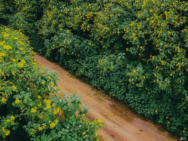 Đà Lạt rục rịch đón mùa hoa Dã quỳ trên 4 cung đường vàng rực đẹp xuất sắc - Ảnh 3.