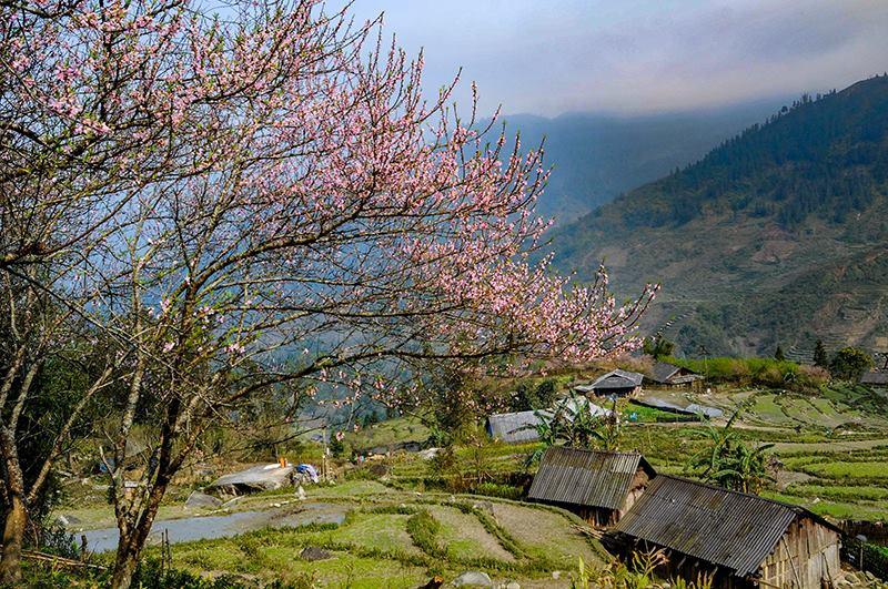 Rực rỡ sắc hoa đào núi tuyệt đẹp ở Sa Pa - Ảnh 6.