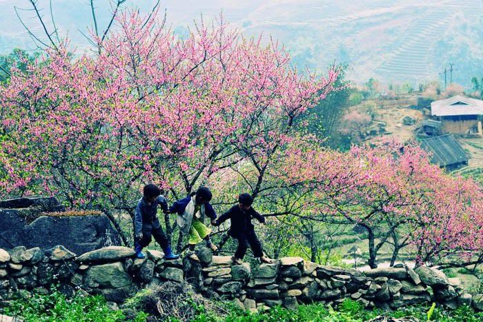 Rực rỡ sắc hoa đào núi tuyệt đẹp ở Sa Pa - Ảnh 3.