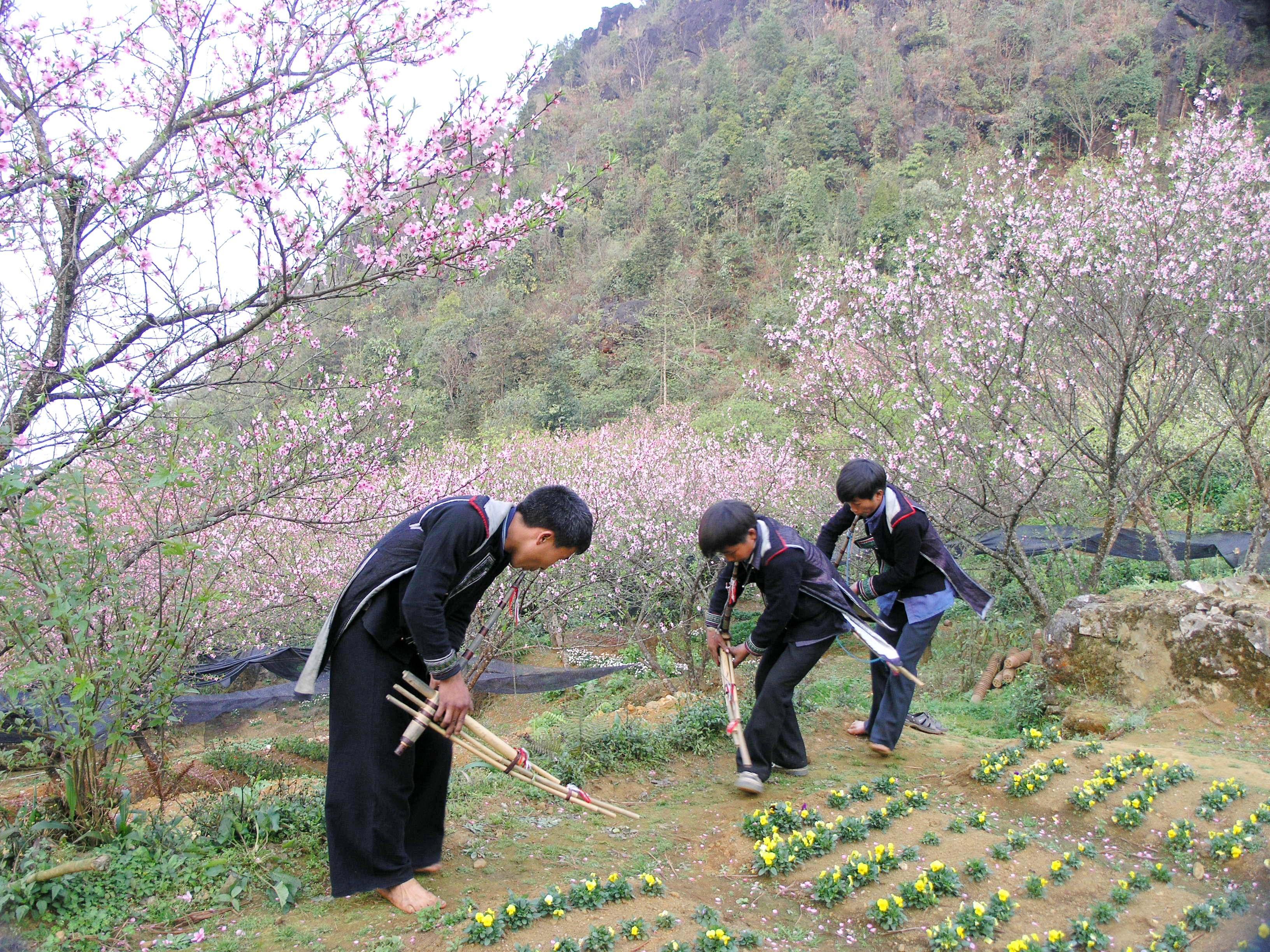 Rực rỡ sắc hoa đào núi tuyệt đẹp ở Sa Pa - Ảnh 1.
