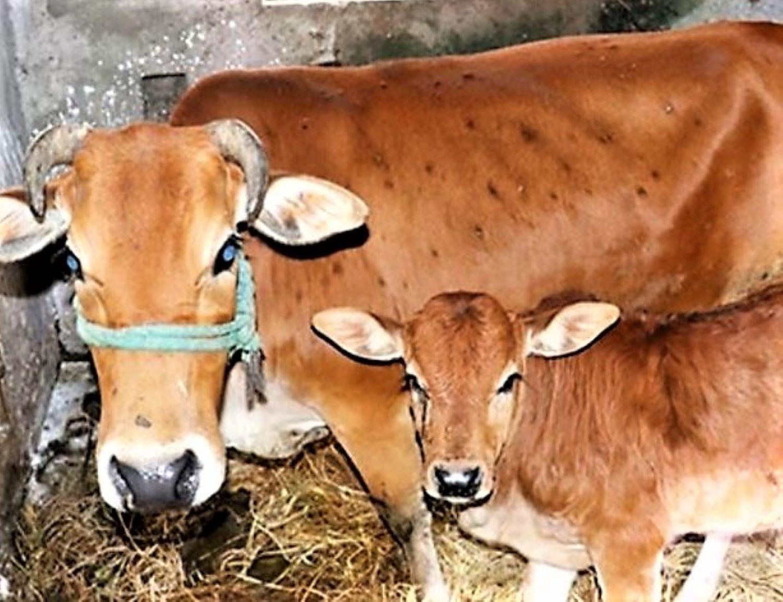 vov_ Ngành nông nghiệp hướng dẫn người chăn nuôi chủ động phòng dịch.jpg