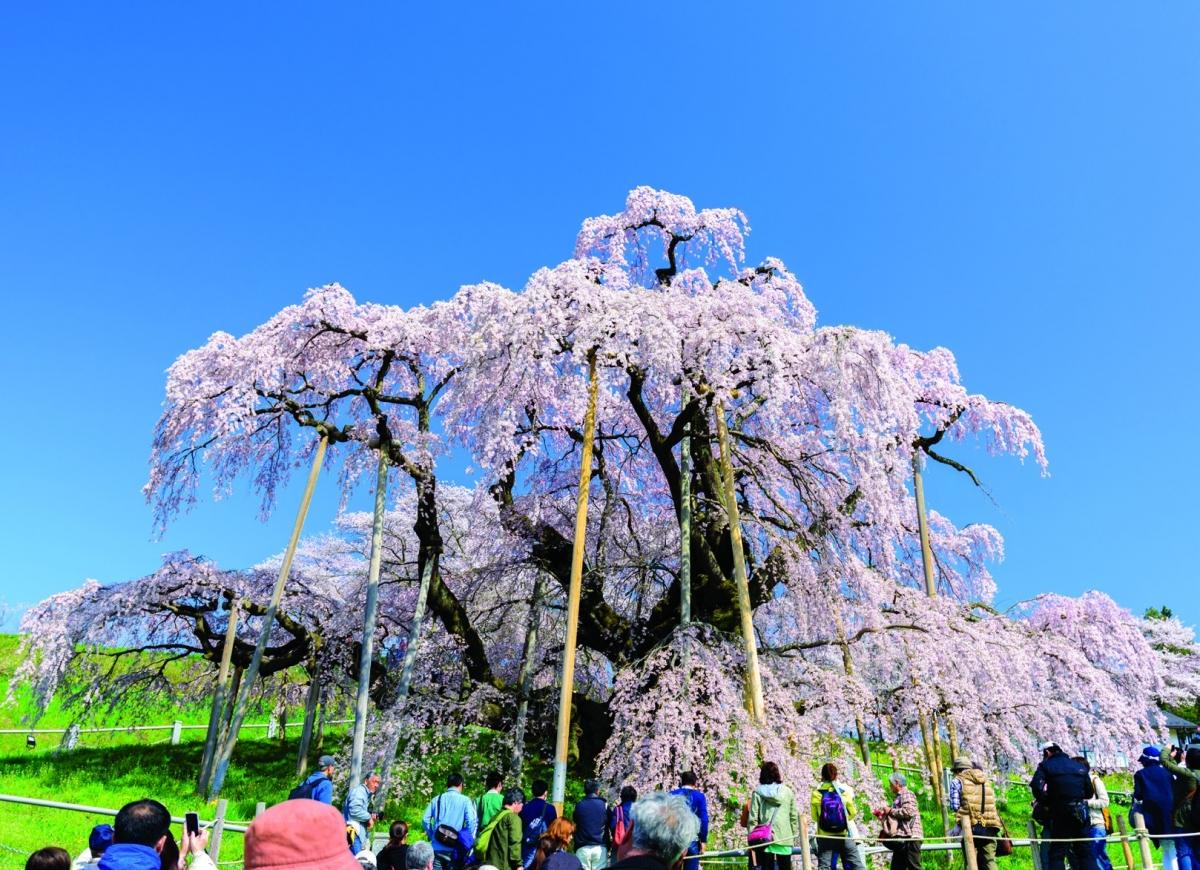 Vẻ đẹp kỳ thú tại quê hương samurai - Ảnh 1.