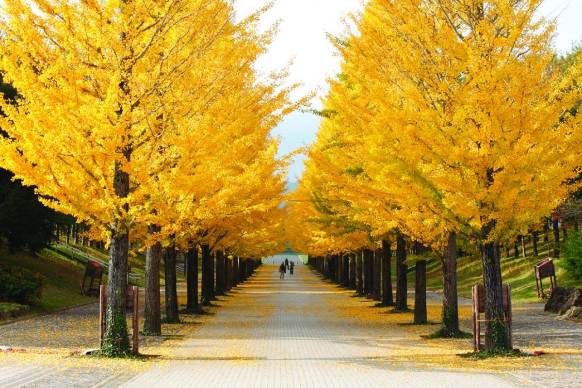 Vẻ đẹp kỳ thú tại quê hương samurai - Ảnh 11.
