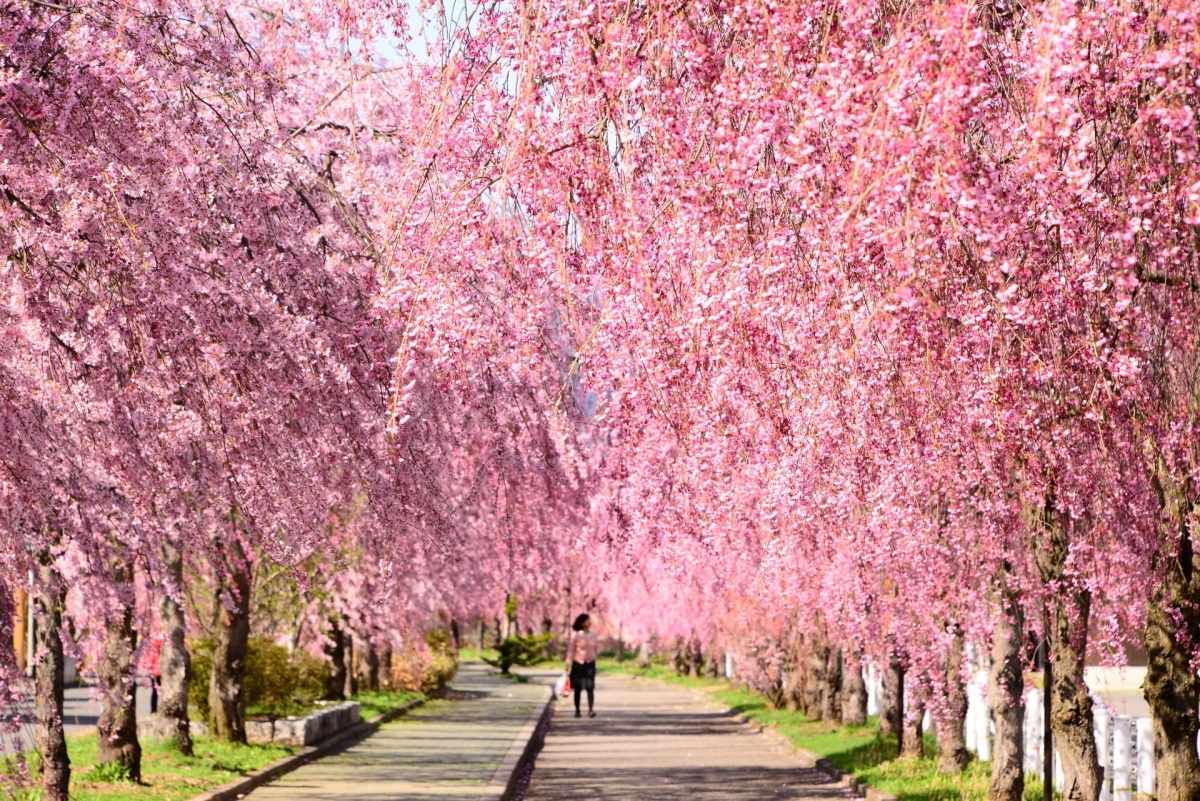 Vẻ đẹp kỳ thú tại quê hương samurai - Ảnh 3.