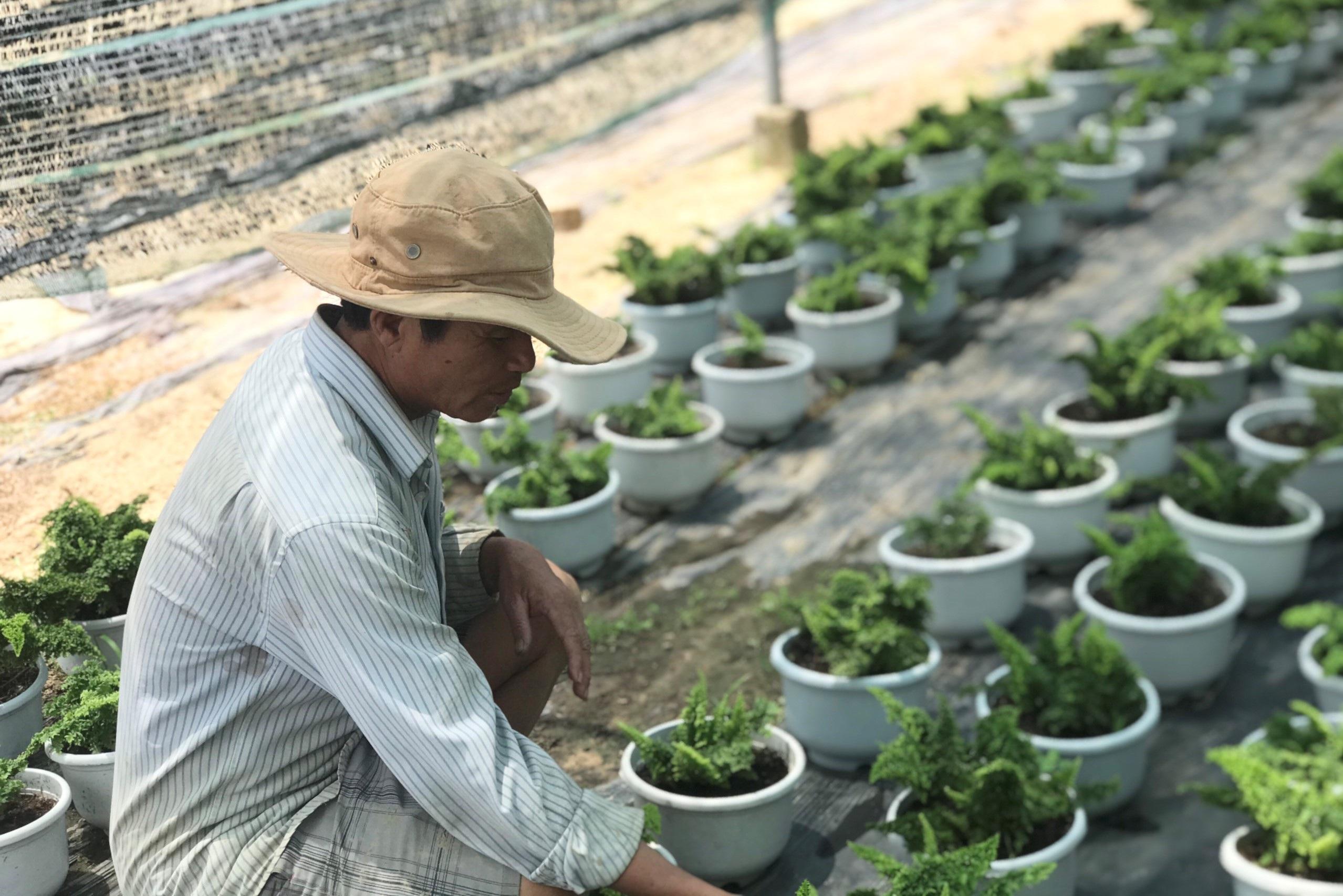 Bỏ phụ hồ về trồng hoa giấy, lão nông thu 500 triệu đồng mỗi năm - Ảnh 4.