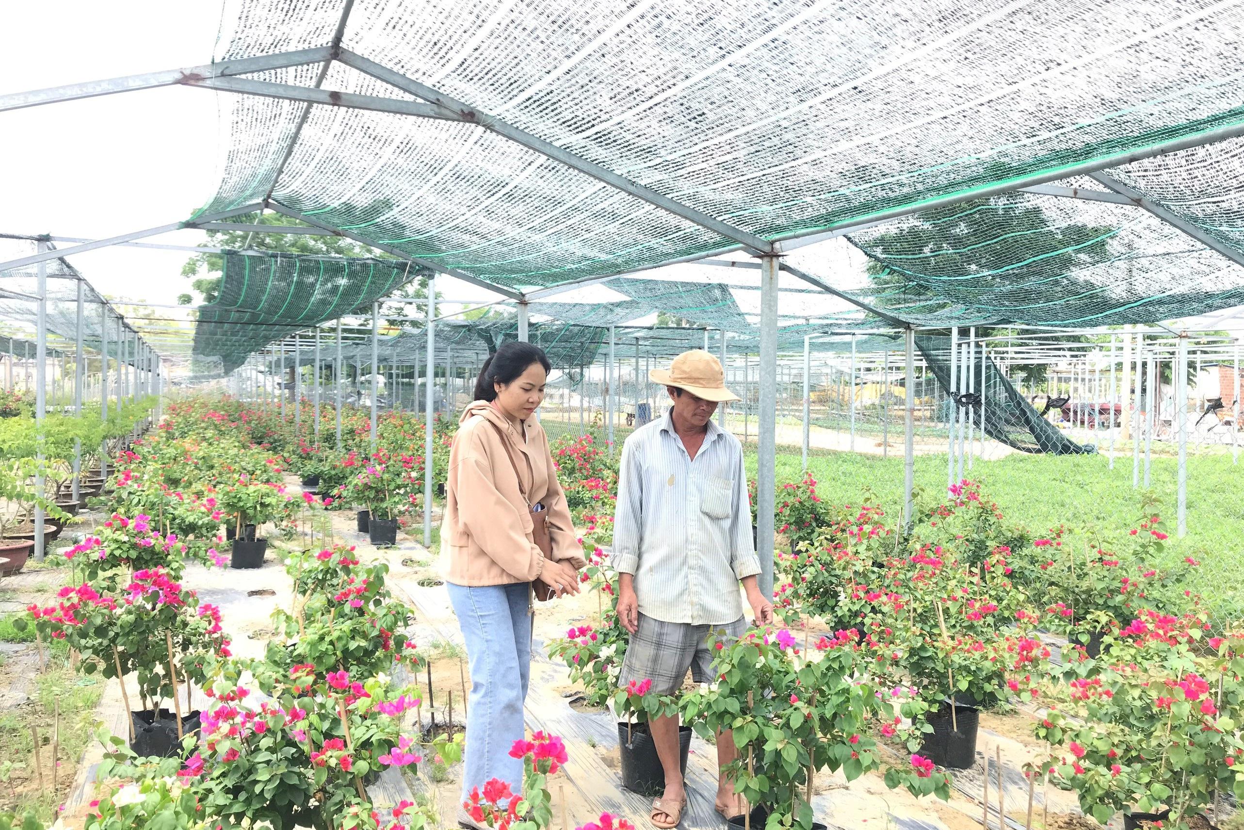 Bỏ phụ hồ về trồng hoa giấy, lão nông thu 500 triệu đồng mỗi năm - Ảnh 2.