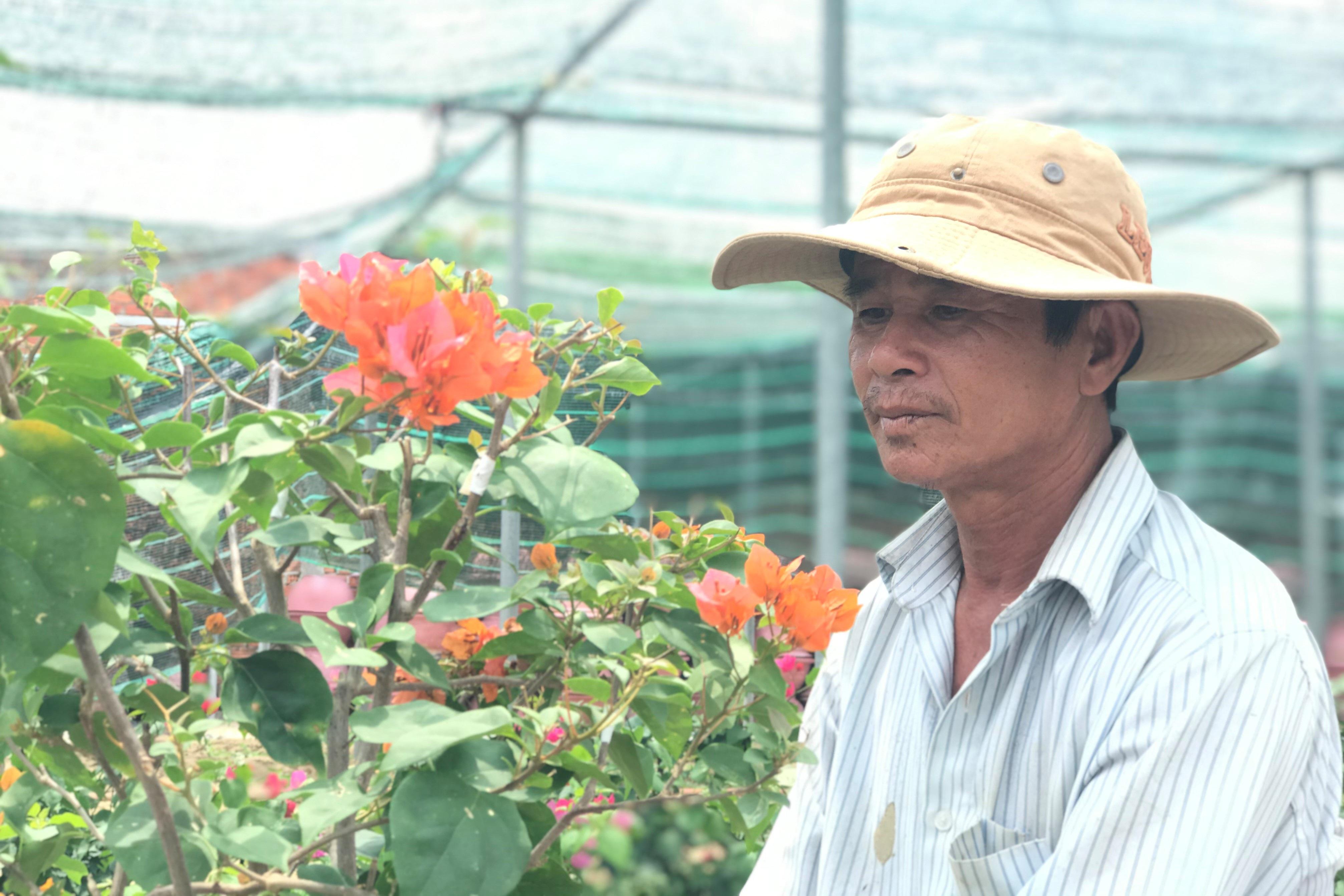 Bỏ phụ hồ về trồng hoa giấy, lão nông thu 500 triệu đồng mỗi năm - Ảnh 1.