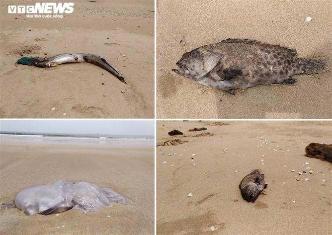 Cá chết hàng loạt ở biển Nghệ An nhưng sau 3 ngày mới lấy mẫu nước phân tích - Ảnh 1.