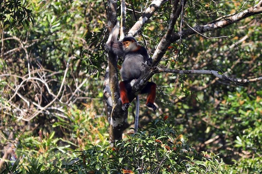 Vườn quốc gia Bạch Mã - kho báu 'di sản thiên nhiên'  - Ảnh 2.