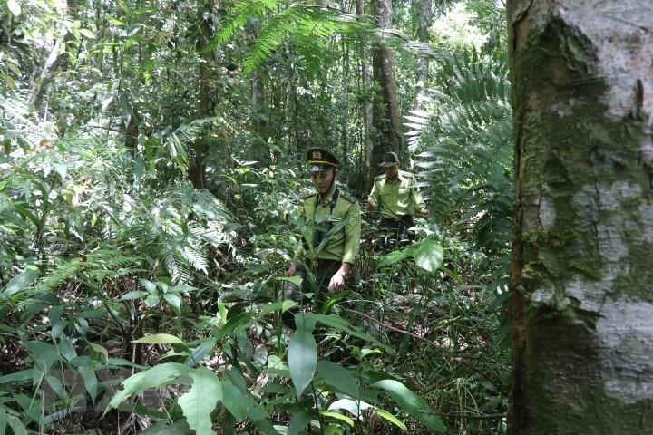 Vườn quốc gia Bạch Mã - kho báu 'di sản thiên nhiên'  - Ảnh 6.
