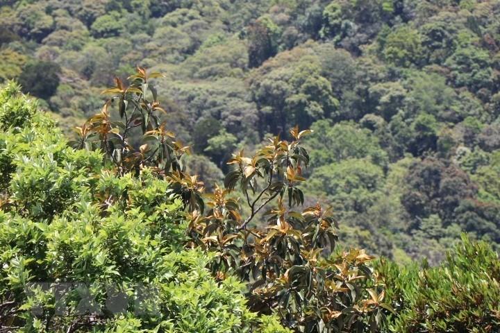 Vườn quốc gia Bạch Mã - kho báu 'di sản thiên nhiên'  - Ảnh 7.