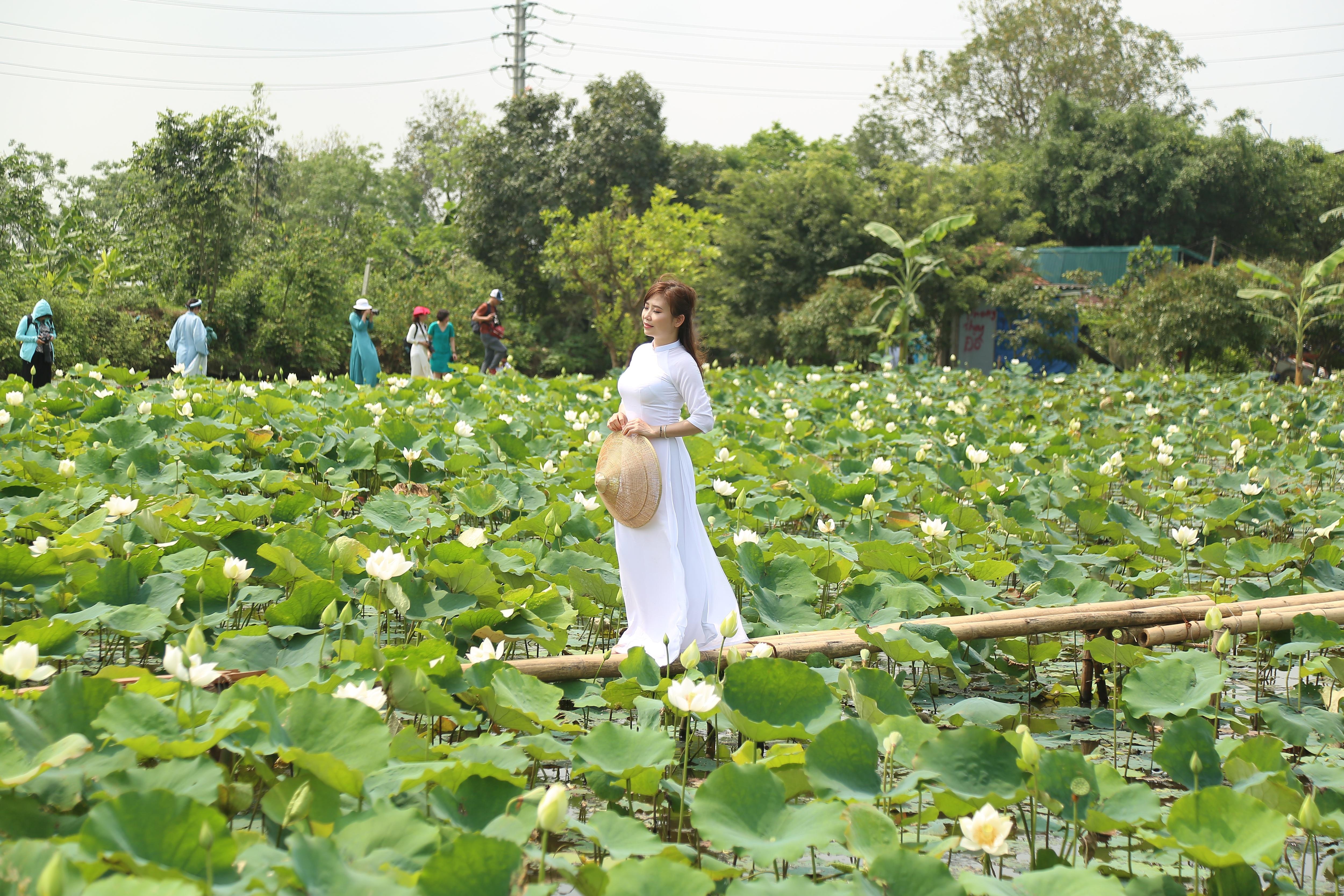 Hà Nội: Kiếm tiền triệu từ nghề trồng hoa sen trắng - Ảnh 4.