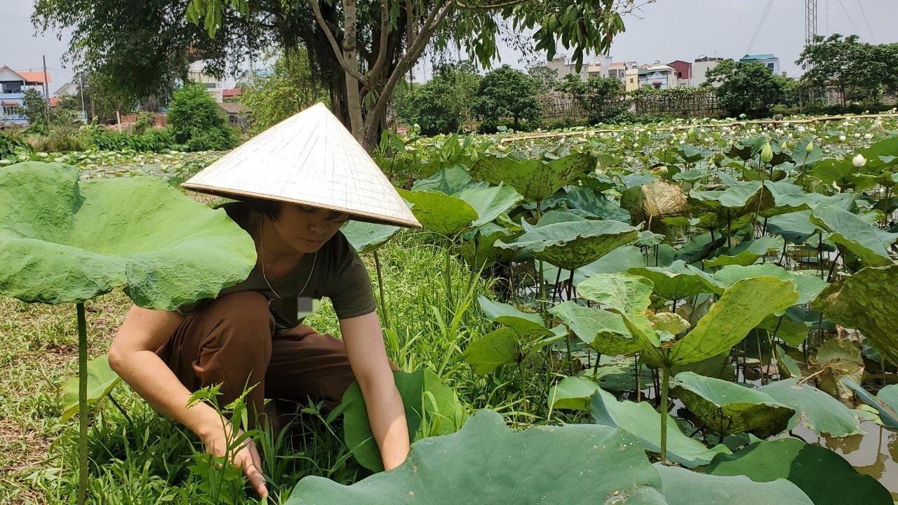 Hà Nội: Kiếm tiền triệu từ nghề trồng hoa sen trắng - Ảnh 5.