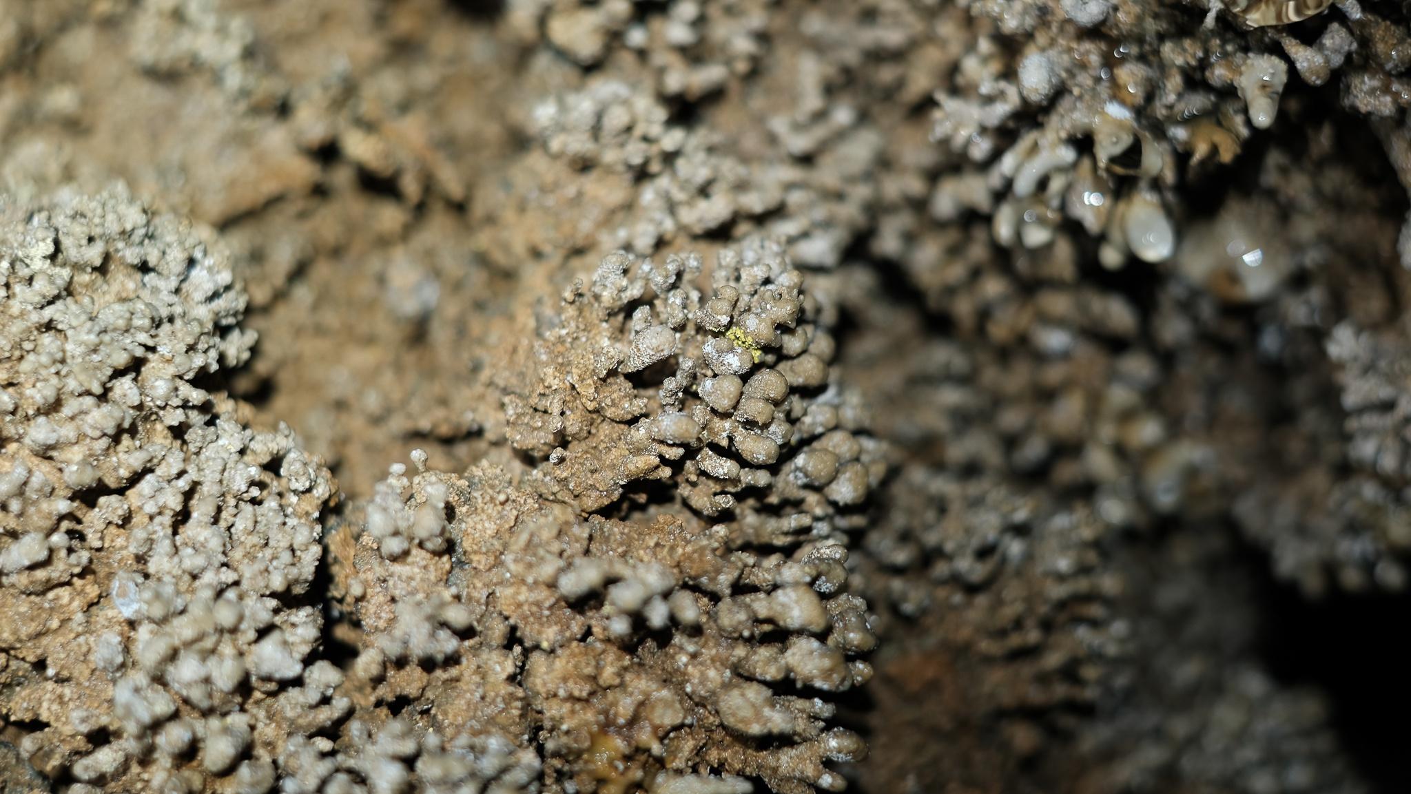 Tuyệt tác thạch nhũ trong hang Chà Lòi - Ảnh 8.