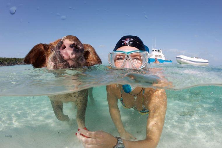 Thú vị hòn đảo có lợn biết bơi, giỏi xin ăn du khách - Ảnh 4.
