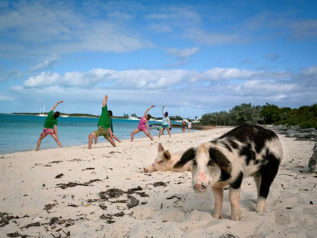 Thú vị hòn đảo có lợn biết bơi, giỏi xin ăn du khách - Ảnh 6.