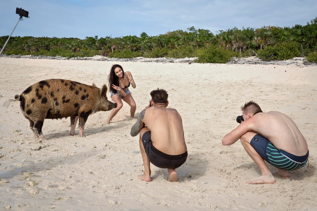 Thú vị hòn đảo có lợn biết bơi, giỏi xin ăn du khách - Ảnh 5.