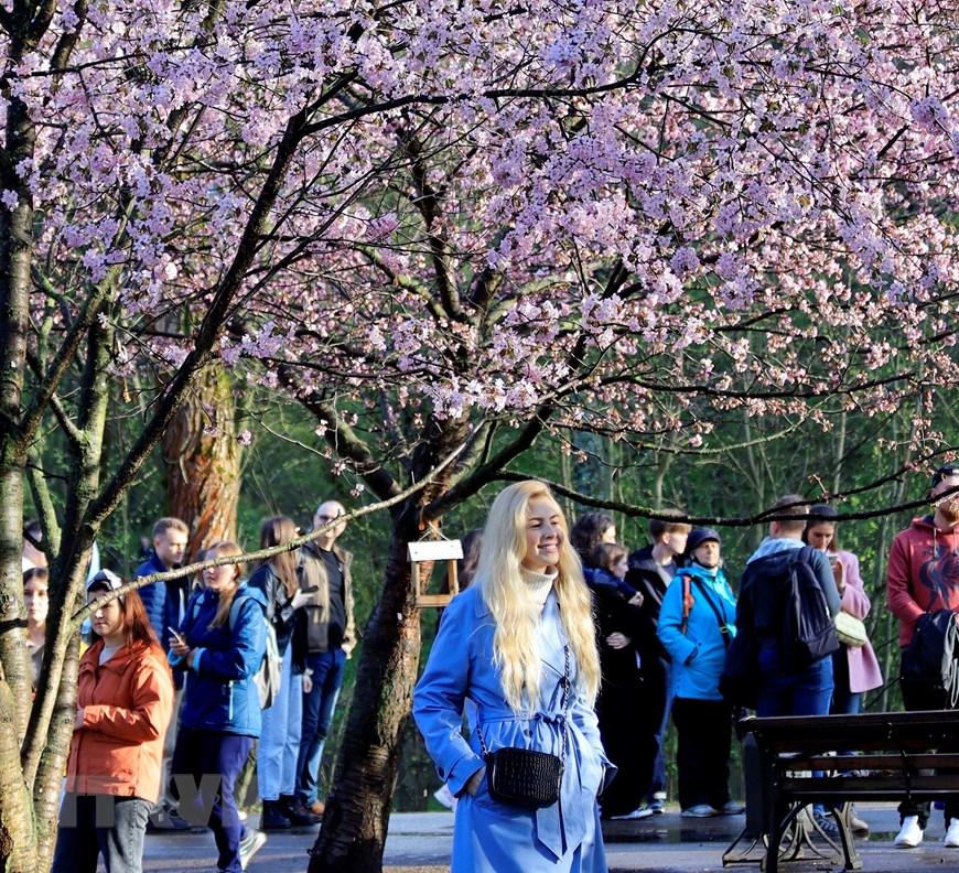 Người dân Moskva đội mưa tới công viên ngắm hoa anh đào đua nở  - Ảnh 8.