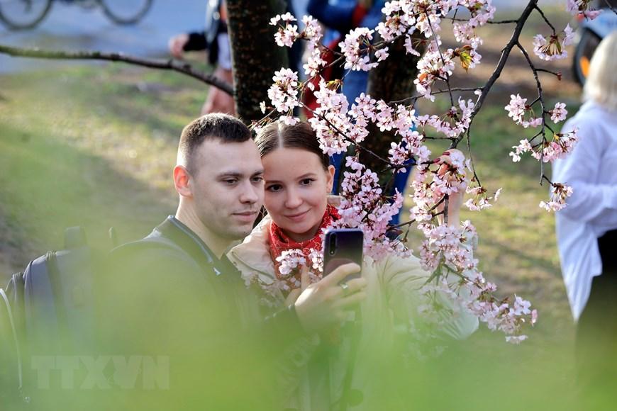 Người dân Moskva đội mưa tới công viên ngắm hoa anh đào đua nở  - Ảnh 9.
