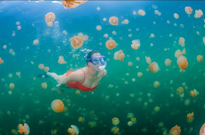 Trải nghiệm cực độc dành cho dân mạo hiểm: Bơi giữa hồ Sứa tồn tại từ kỷ băng hà - Ảnh 6.