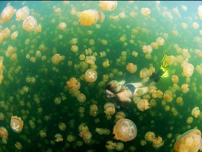 Trải nghiệm cực độc dành cho dân mạo hiểm: Bơi giữa hồ Sứa tồn tại từ kỷ băng hà - Ảnh 7.