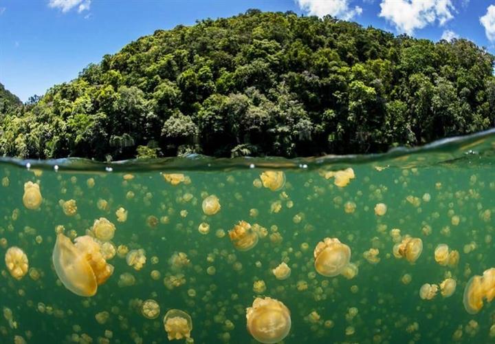 Trải nghiệm cực độc dành cho dân mạo hiểm: Bơi giữa hồ Sứa tồn tại từ kỷ băng hà - Ảnh 4.