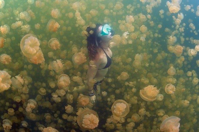 Trải nghiệm cực độc dành cho dân mạo hiểm: Bơi giữa hồ Sứa tồn tại từ kỷ băng hà - Ảnh 8.