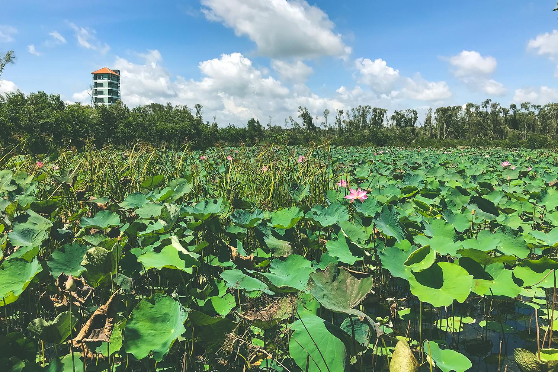 Về Làng nổi Tân Lập - Check-in đường xuyên rừng tràm đẹp nhất Việt Nam - Ảnh 2.