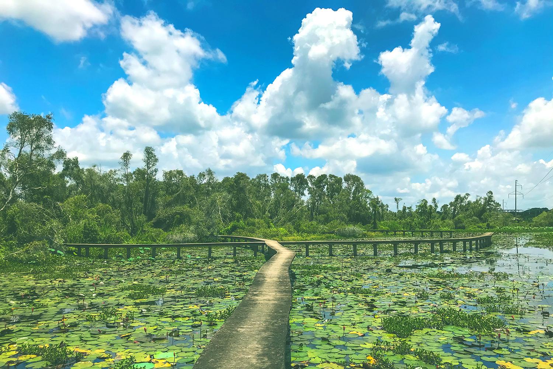Về Làng nổi Tân Lập - Check-in đường xuyên rừng tràm đẹp nhất Việt Nam - Ảnh 7.