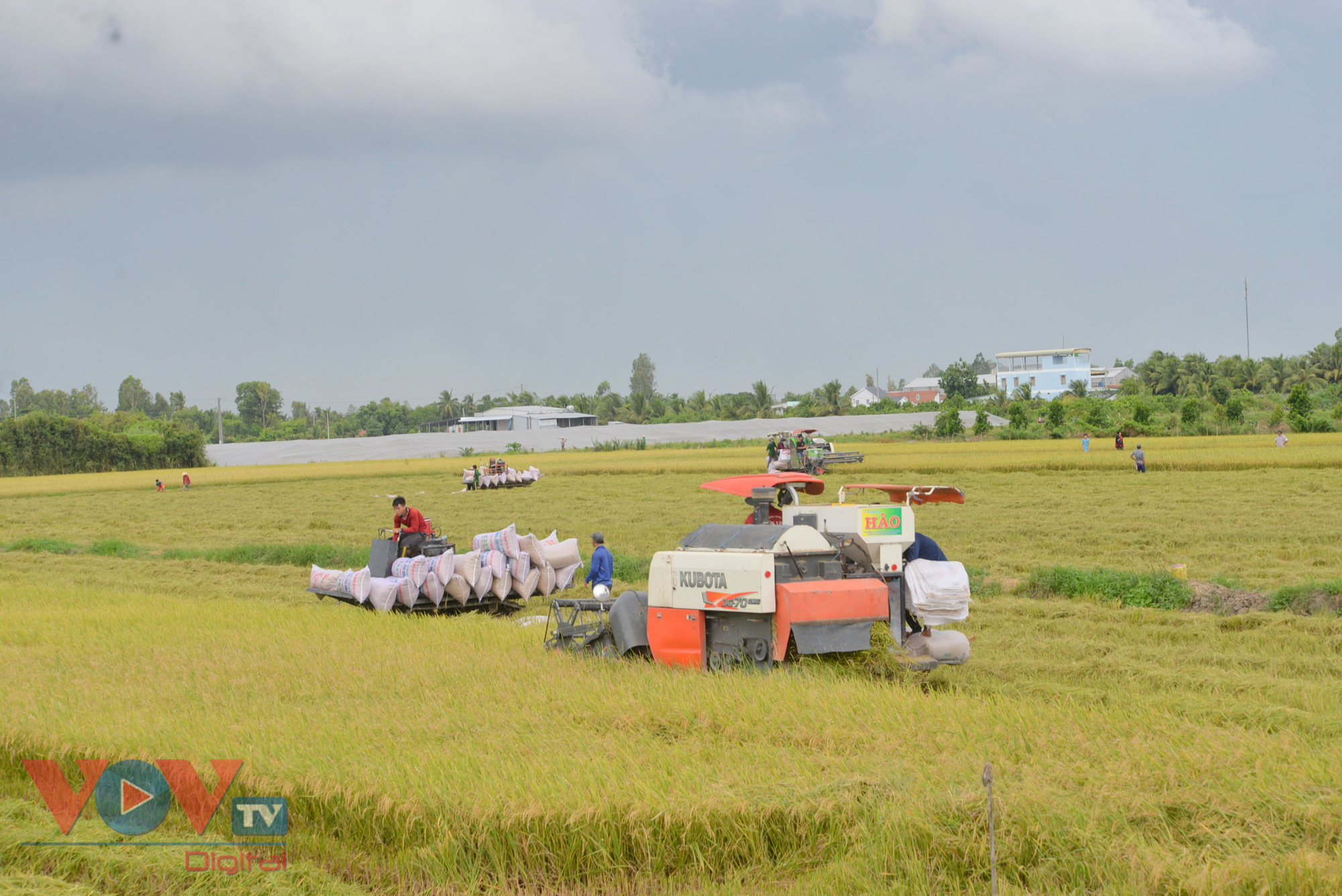 Vừa vật lộn phòng chống dịch, vựa lúa miền Tây khó khăn tìm giải pháp tiêu thụ lúa gạo - Ảnh 3.