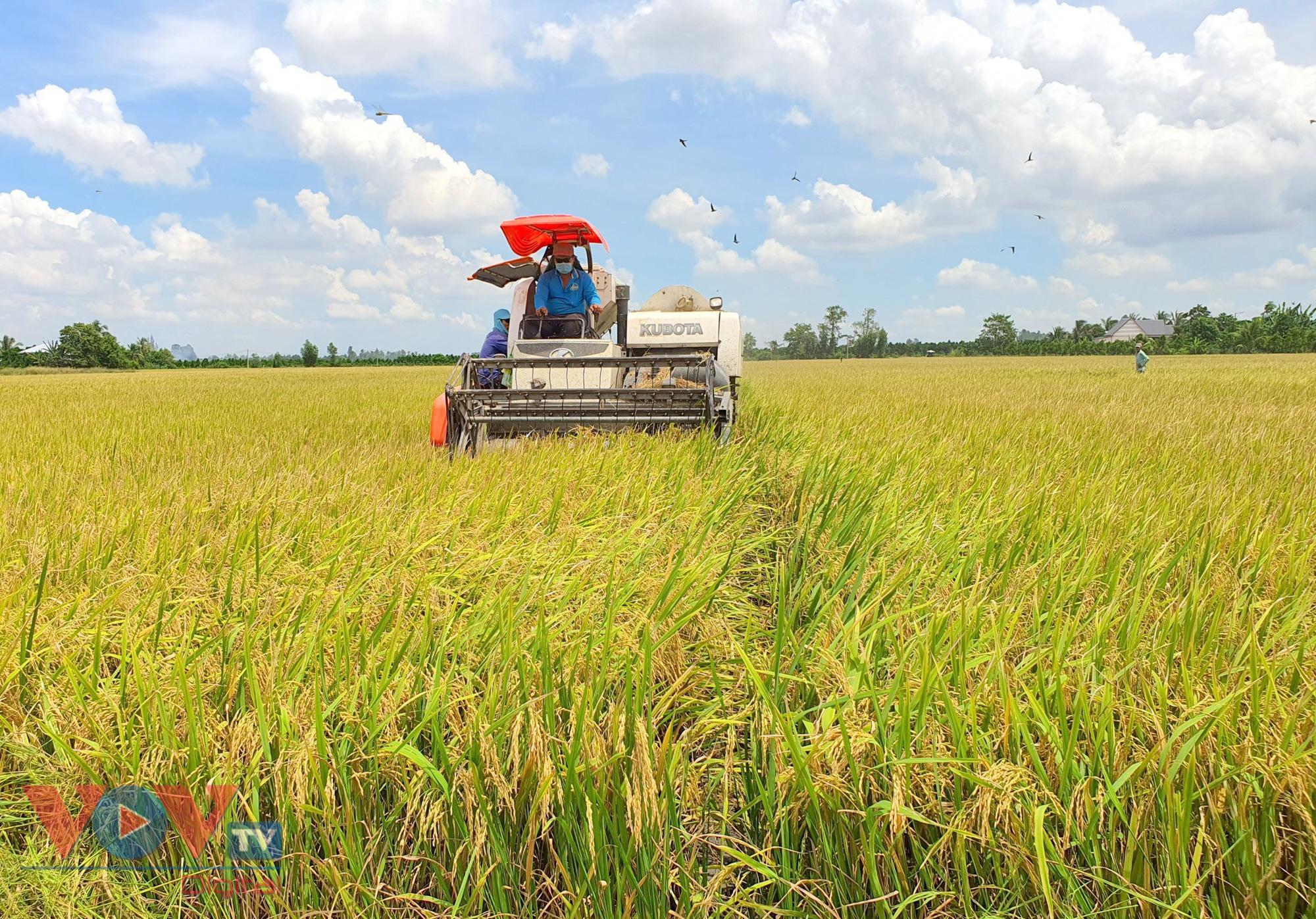 Vừa vật lộn phòng chống dịch, vựa lúa miền Tây khó khăn tìm giải pháp tiêu thụ lúa gạo - Ảnh 4.