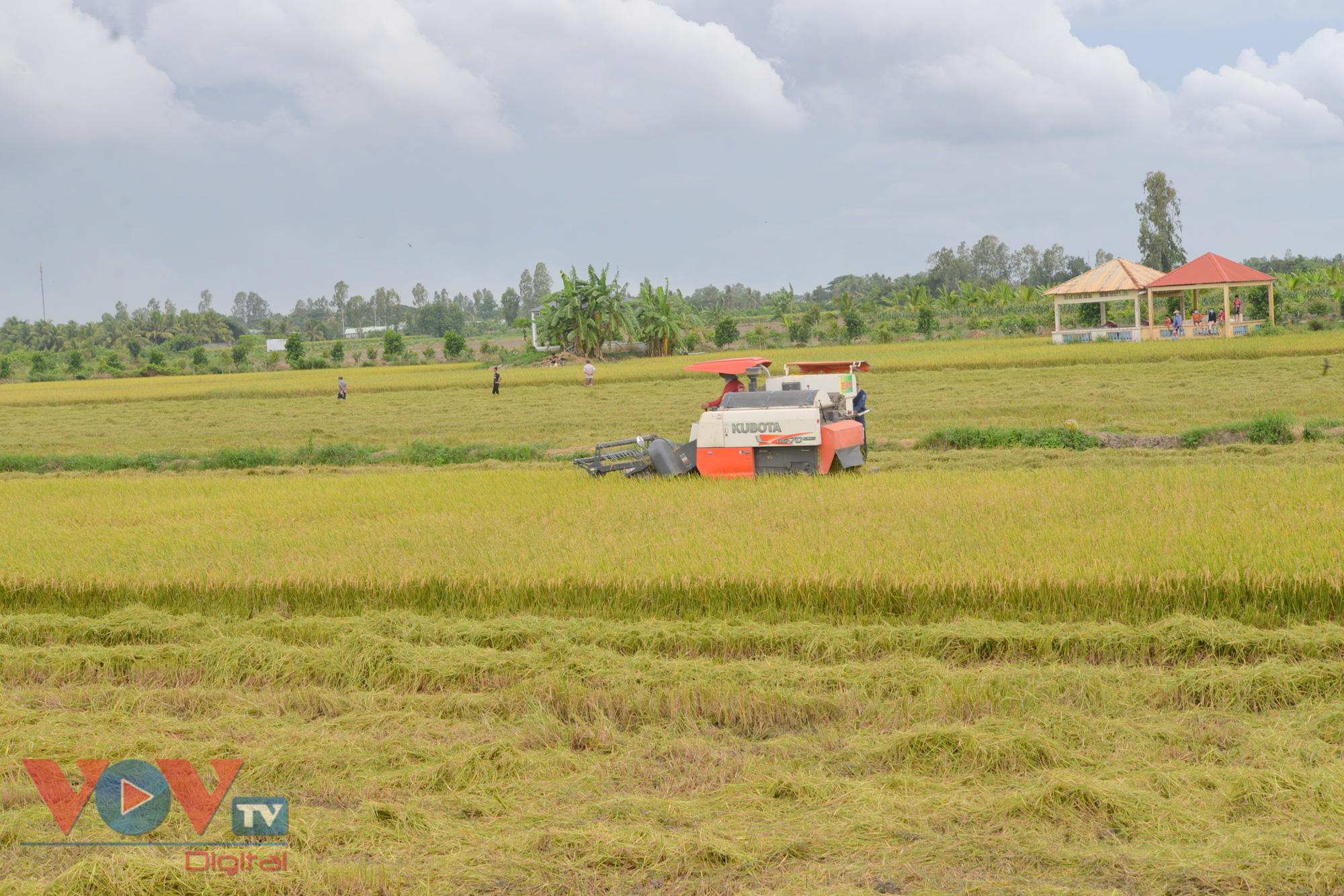 Vừa vật lộn phòng chống dịch, vựa lúa miền Tây khó khăn tìm giải pháp tiêu thụ lúa gạo - Ảnh 5.
