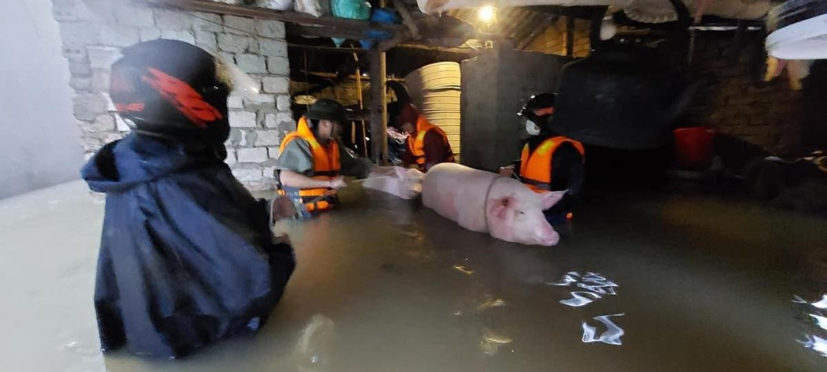 Nghệ An di dời dân khẩn cấp khi có gần 700 nhà dân bị ngập do mưa lũ - Ảnh 1.