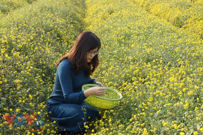 Làng Nghĩa Trai vào mùa thu hoạch hoa cúc chi - Ảnh 17.